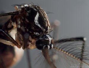 Período chuvoso aumenta criadouros de Aedes aegypti