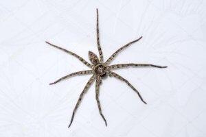 Como acabar com as aranhas em casa ou no apartamento